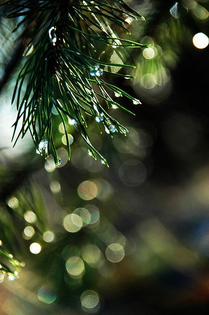 Raindrop Bokeh by Fiona * lunasdal on Flickr