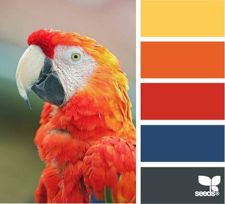 macaw spectrum: Color Palettes, Idea, Design Seeds, Color Combos, Color Macaw, Colors, Colour Palettes, Macaw Spectrum