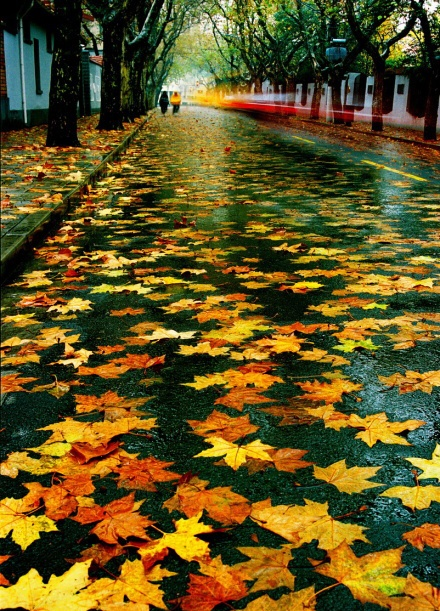 moring after the autumn rain! gorg.