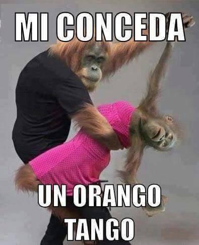 """Foto Divertente: Due scimmie che ballano un """"orango tango"""""""