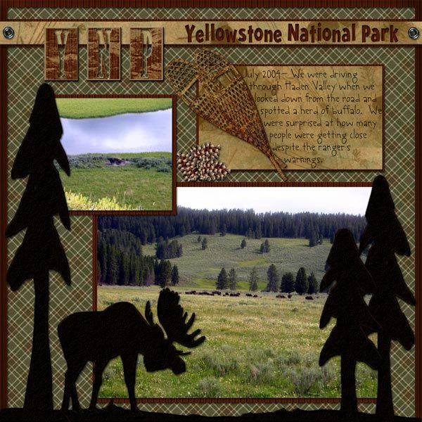 buffaloinhaydenvalley-copy