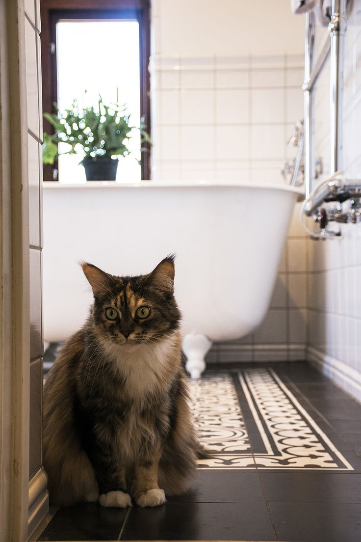 Snyggt badrumsgolv - se hur på qvesarum