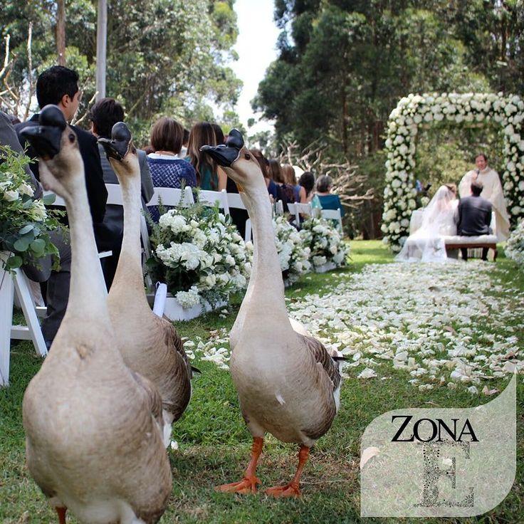 ¡Espontáneos! #ZonaELlanogrande    Contáctanos al 3106158616 / 3206750352 / 3106159806 y reserva desde ya, atendemos todos los días de la semana y fines de semana incluido festivos. www.zonae.com   #ZonaE #ElEstablo #bodasmedellin #CasaBali #GreenHouse #Eventos #BodasAlAireLibre #weddingplaner #BodasCampestres #bodas #boda #wedding #destinationwedding #bodascolombia #tuboda #Love #Bride