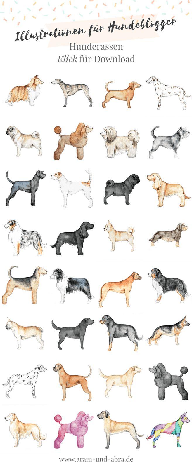 Illustrationen für Hundeblogger, Teil 2: Hunderassen | Aquarell, Hunde, zeichnen, Grafiken, Aram und Abra