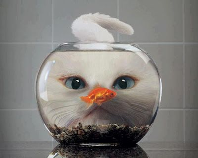 <0> cat and fish