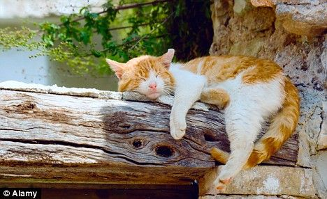A cat naps on a wooden beam in Paxos