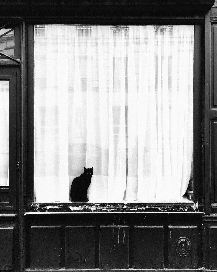 Black #cat in the window. On the border of #13eme and #5eme in #paris