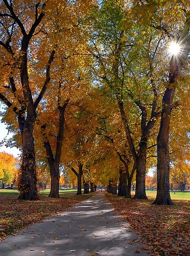 Colorado State University --- http://meetmycollege.com/Home/College/2909