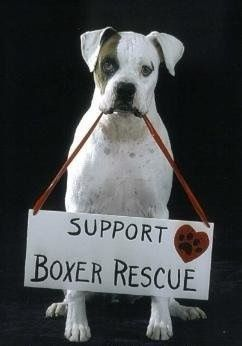 Boxer Rescue. We got our first family dog from rescue and have since been loyal boxer dog owners