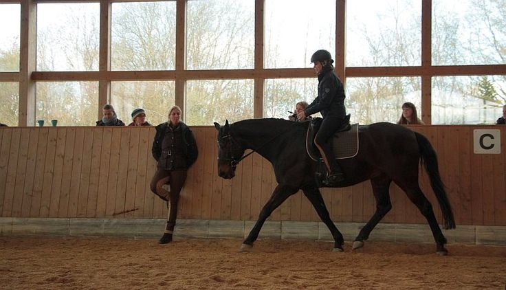 19/03/16 Reiten in Balance - Dressurunterricht Lehrgang mit Petra Köpcke in Bargteheide (Schleswig-Holstein), Hof Ohana