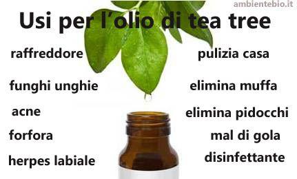 L'olio di tea tree è un derivato dalla Melaleuca alternifolia, ed è nativo in Australia. Gli indigeni australiani ha usato l'olio per il trattamento di infezioni della pelle e ferite da sempre, add...