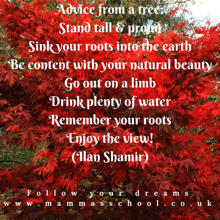Inspiration Wednesday - Advice From A Tree, quotes, quote, inspirational quotes, motivational quotes, www.mammasschool.co.uk