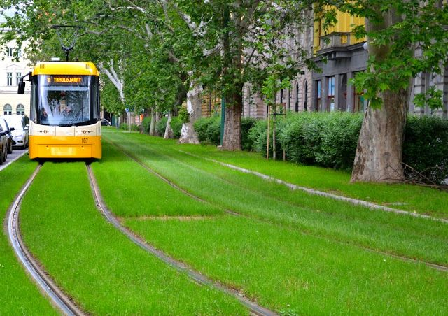 Green tramway in Szeged, Hungary