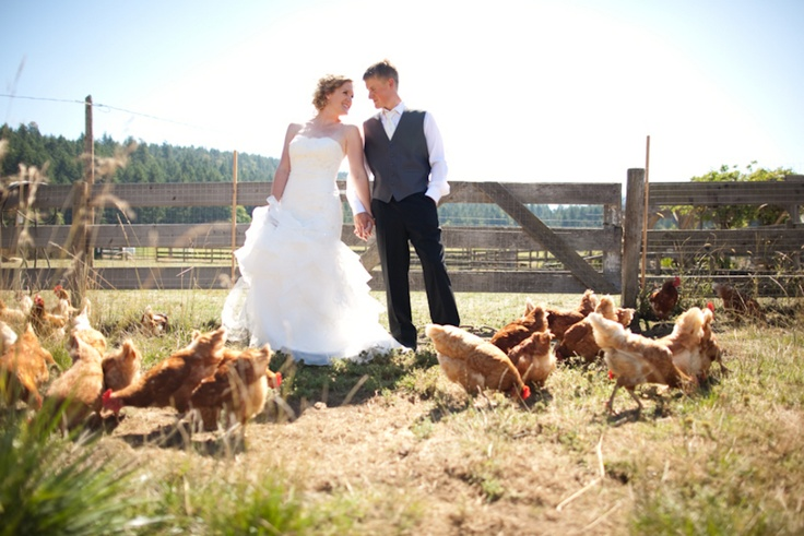Farm animals and weddings!