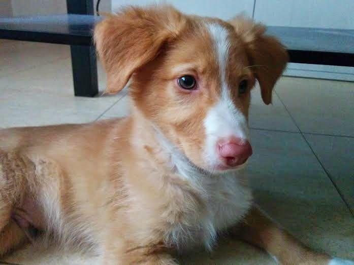 (ASBAAL) - Asociación para el Bienestar de los Animales: MAIKEL - Cachorro Macho de 4 Meses Tamaño Mediano - En Adopción