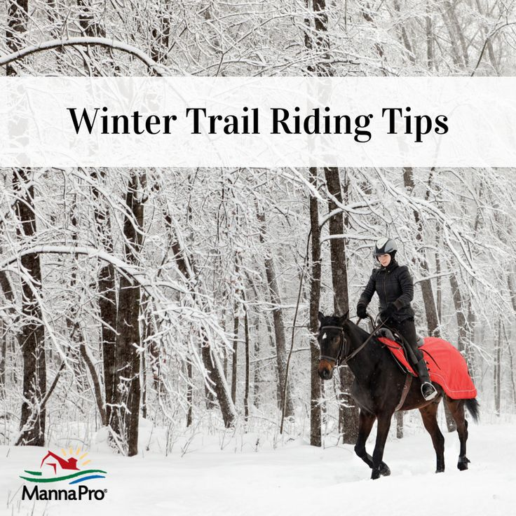 Best 25+ Horseback riding tips ideas on Pinterest
