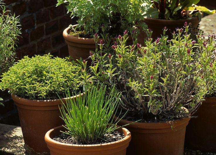 Les erreurs à éviter dans los angeles tradition des plantes aromatiques