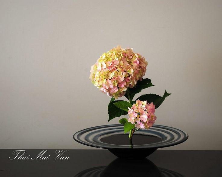 Simply hydrangeas.   #flower arrangement: Arrangements Ideas, Flowers Arrangements, Flower Arrangements, Simple Flowers, Arrangements Ikebana, Outdoor Arrangements, Simply Hydrangeas