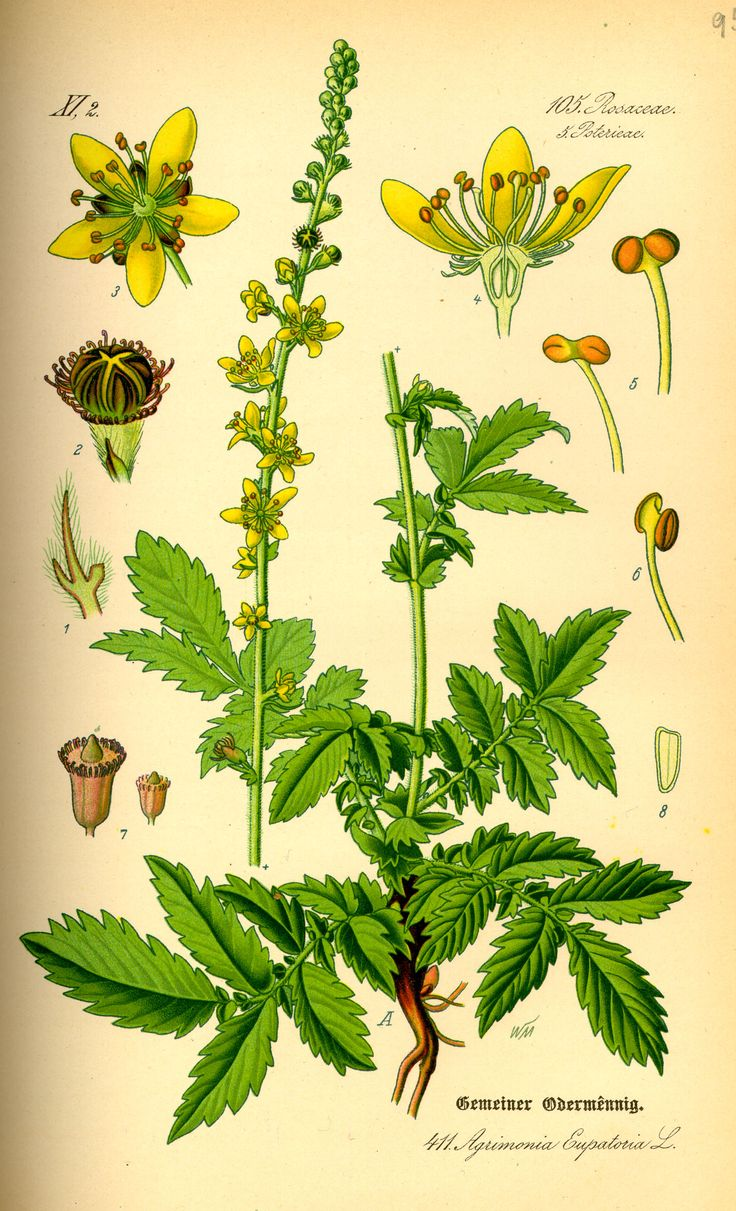 Agrimonia Eupatoria (Bach Flower Remedies) Keywords: Addiction, unhappy, anxiety Human Indication: Mental torment behind a brave face. Appear care-free and humorous in order to mask anxieties.