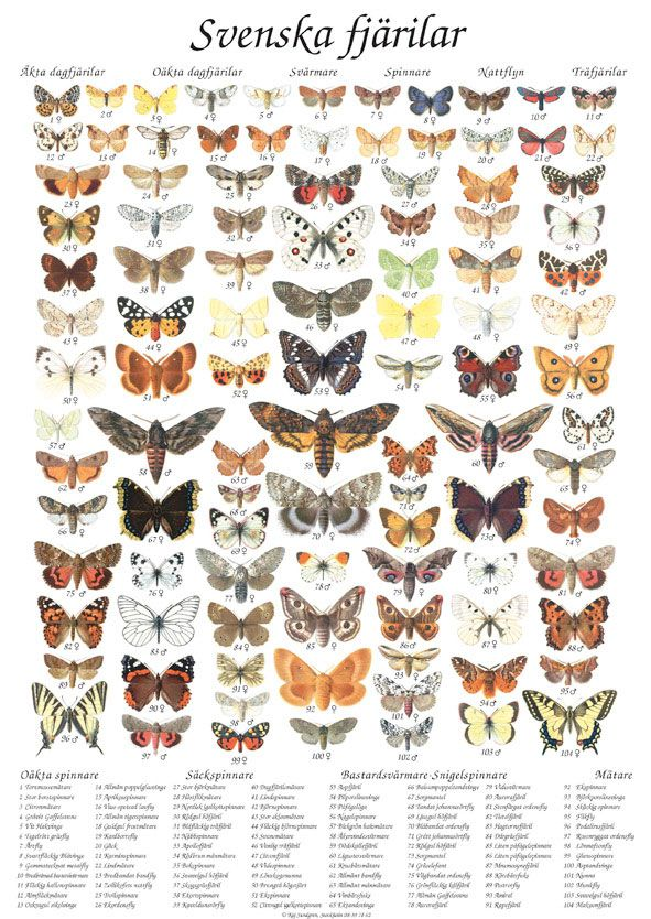 Photos of Various Moths | ... maps of different typologies (mushrooms, fish, dog, birds, and moths