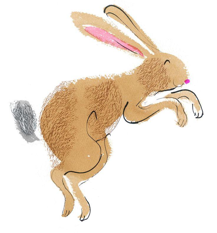 Suffolk hare, children's book illustration.