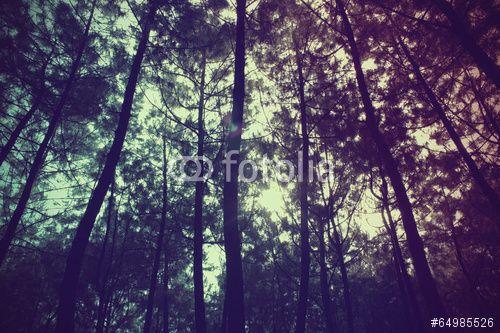 Pine Forest ( download here ) http://us.fotolia.com/p/204830000/partner/204830000