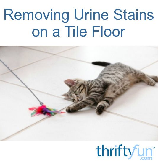Removing urine stains and odors from flooring can be a challenge. This guide is about cleaning pet urine stains and odors from a tile floor.