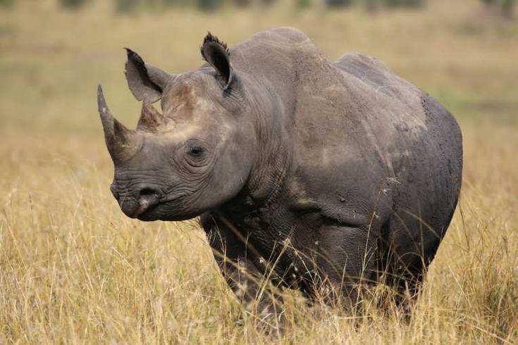 Tribunal sul-africano condena moçambicano a 14 anos de prisão por prática de caça furtiva - http://www.clubofmozambique.com/pt/sectionnews.php?secao=mocambique=26179=one
