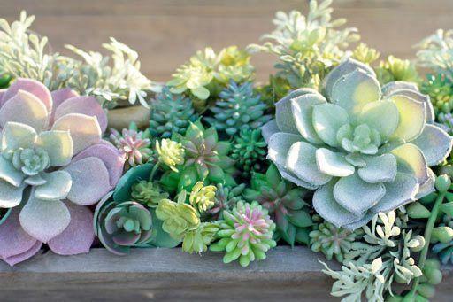 How to Propagate Succulent Plants