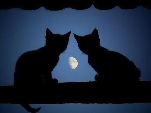 """""""The cat has always been associated with the moon.  Like the moon it comes to life at night, escaping from humanity and wandering over housetops with its eyes beaming out through the darkness."""" --Patricia Dale-Green"""