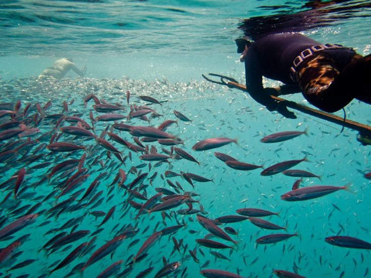 1000 images about freediving spearfishing on pinterest for Deep sea fishing st thomas
