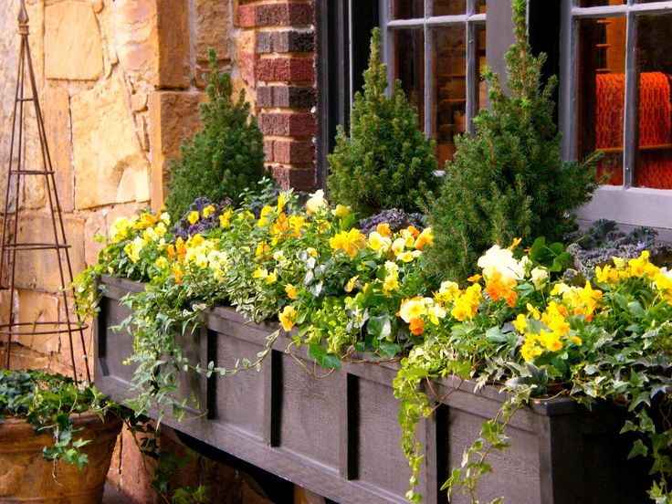 Very pretty: Gardens Ideas, Evergreen Shrubs, Window Planters Boxes Ideas, Boxes Chic, Google Search, Front Of House, Window Flowers Boxes, Flower Boxes, Window Boxes