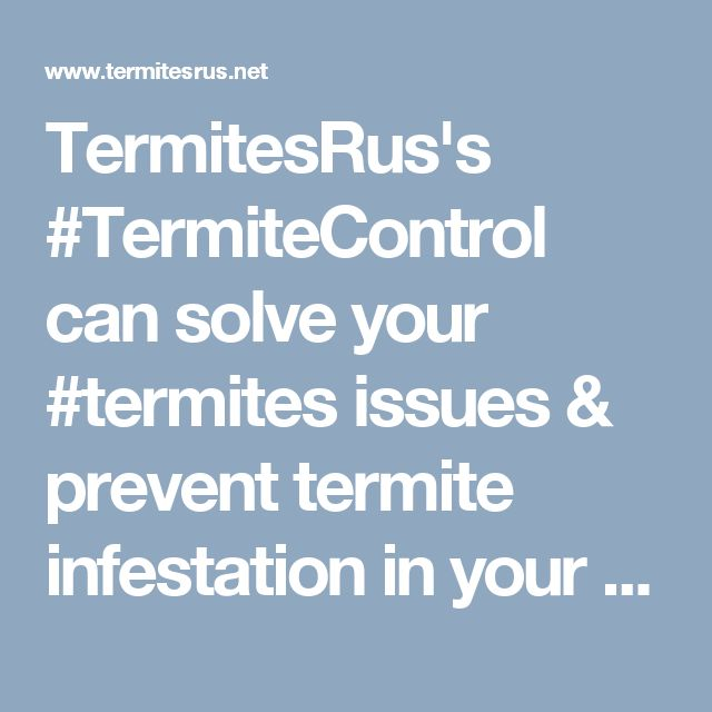 TermitesRus's #TermiteControl can solve your #termites issues & prevent termite infestation in your #Brisbane home. Contact us today & exterminate those termites.