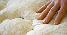comment-vous-debarrasser-des-parasites-et-des-punaises-de-lit-facilement