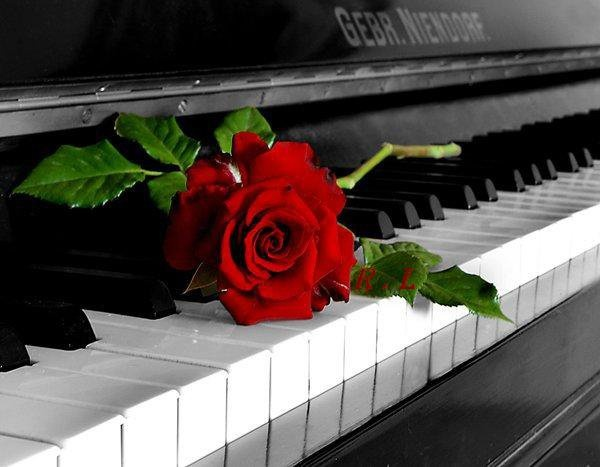 Rose on piano | roses in 2019 | Music images, Piano, Music ...