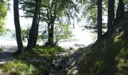 Vandretur: Corselitze - vandreture i private skove