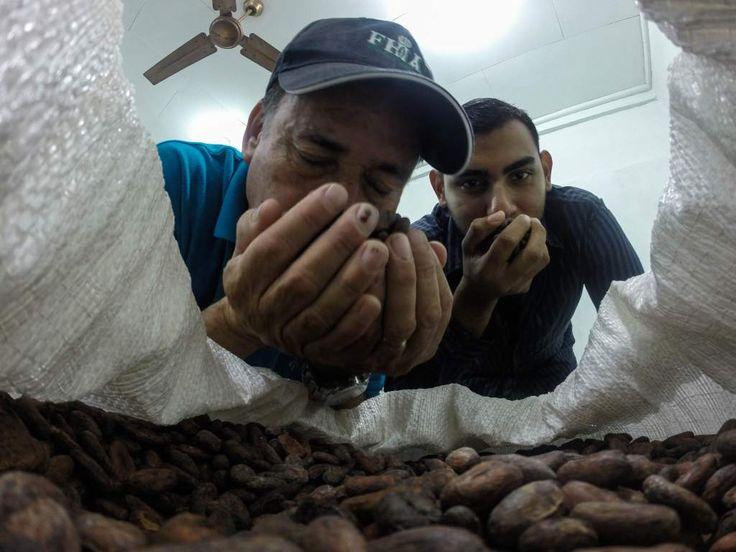 Reconocimiento en París motiva a productores de cacao en Honduras Organizaciones coinciden en que la calidad certificada abre las puertas a grandes mercados. Aroldo Dubón, jefe del Cedec -Jas de la Fhia, huele los granos del cacao ganador en el Cocoa of Excellence 2015. Fotos: Wendell Escoto