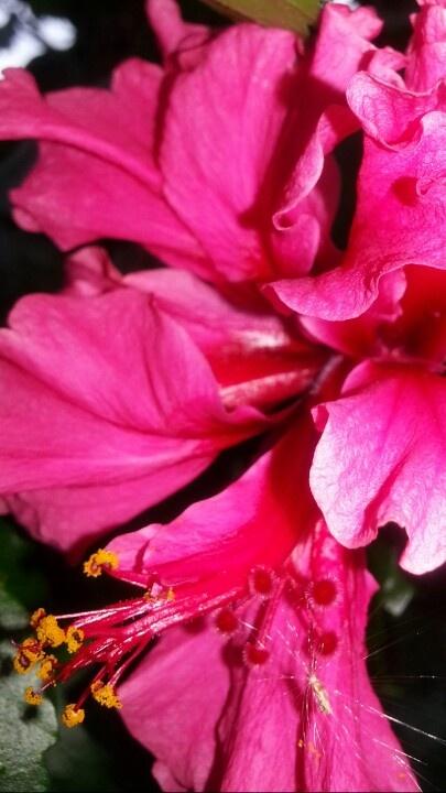 #gardening  #photography #photo #nature #red: Photo Natural, Photo Photography, Gardens Photography, Photography Photo, Flowers Photo