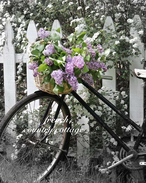 French Country Cottage A Bouquet Of Lilacs Bloomin