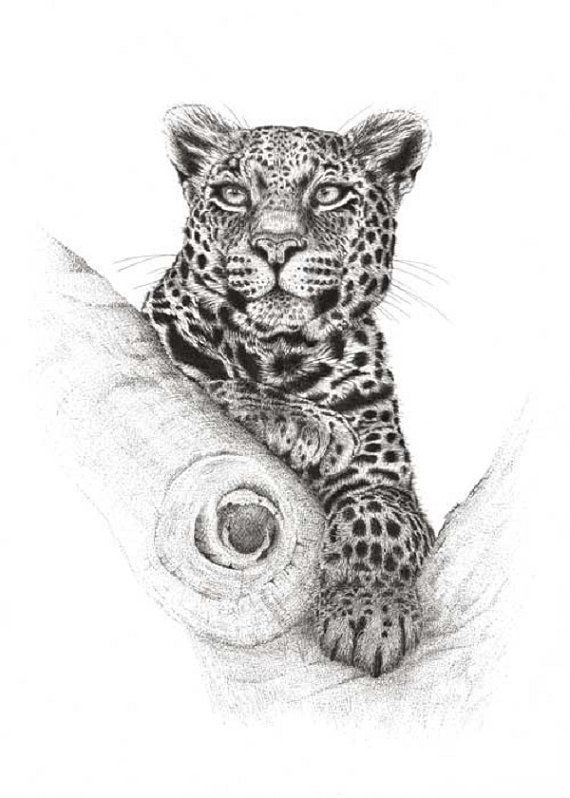 Artwork Leopard High and Mighty. Limited Edition by DaisyClaridge