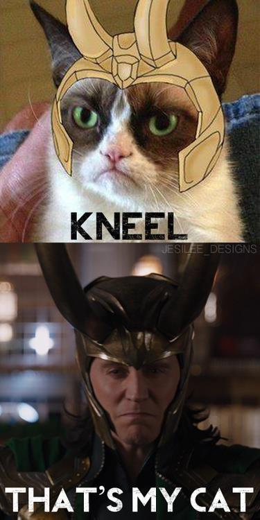 Loki / grumpy cat -- Aw, cuteness alert!