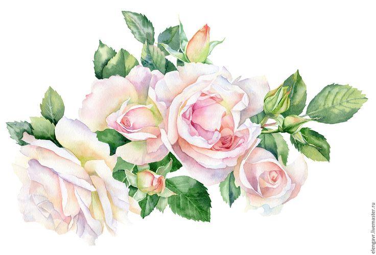 Купить Розовые розы акварелью на белом фоне - кремовый, розовый цвет, розовые розы