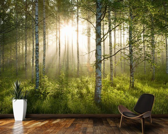 Birch Forest Sunlight House Bedroom Murals Tree