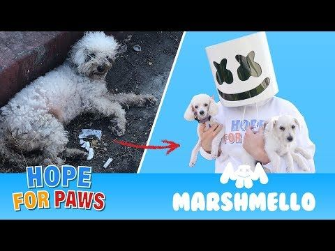 Marshmello ft  Hope For Paws - HAPPIER together compilation
