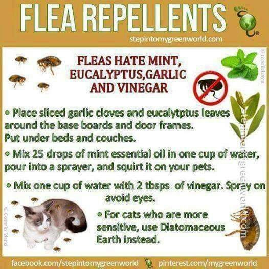 Natural Remedy For Ticks On Humans