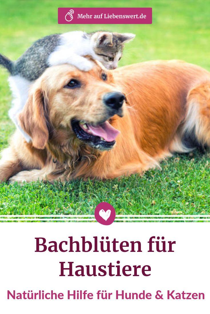 Bachbluten Fur Tiere Hunden Und Katzen Naturlich Helfen Hund
