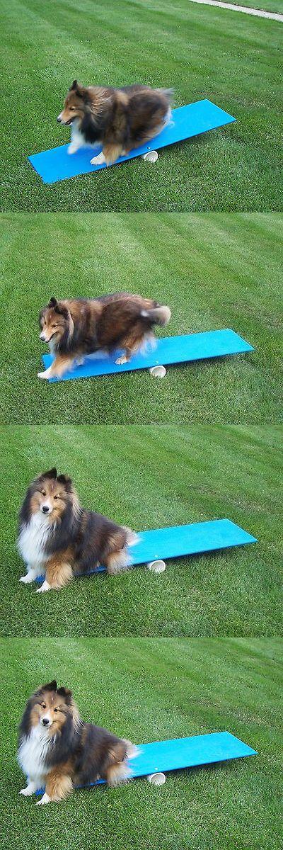 17 Best Ideas About Dog Agility On Pinterest Dog Agility