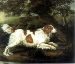 English Water Spaniel: Extinct since the early 1900's, the English Water Spaniel was an adept waterfowl hunting dog. It has been said that these dogs could swim, duck, and dive as well as the waterfowl they were hunting.