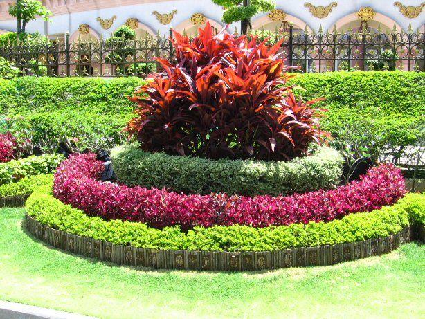 Cordyline duranta var jessica red and duranta gold landscaping pinterest red and gold - Disenos de jardin ...