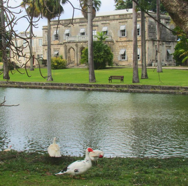 Relaxing with the ducks at Codrington College on the east coast of Barbados.